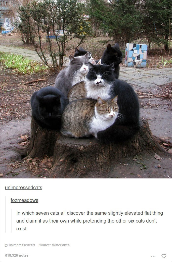 Cat - unimpressedcats: fozmeadows: In which seven cats all discover the same slightly elevated flat thing and claim it as their own while pretending the other six cats don't exist. unimpressedcats Source: misterjakes 518,326 notes