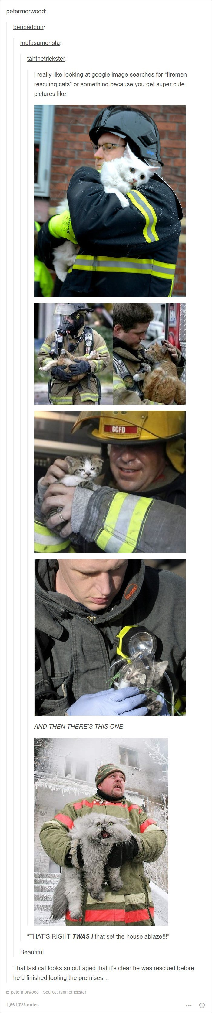 """Helmet - petermorwood: benpaddon: mufasamonsta: tahthetrickster really like looking at google image searches for """"firemen rescuing cats"""" or something because you get super cute pictures like CCFD AND THEN THERE'S THIS ONE """"THAT'S RIGHT TWAS I that set the house ablaze!!!"""" Beautiful That last cat looks so outraged that it's clear he was rescued before he'd finished looting the premises.. petermorwood Source: tahthetrickster 1,561,723 notes"""