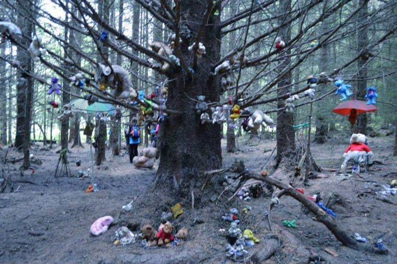 tree in forest with stuffed toys hanging from it