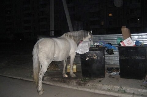 a white horse eating from a bin at night