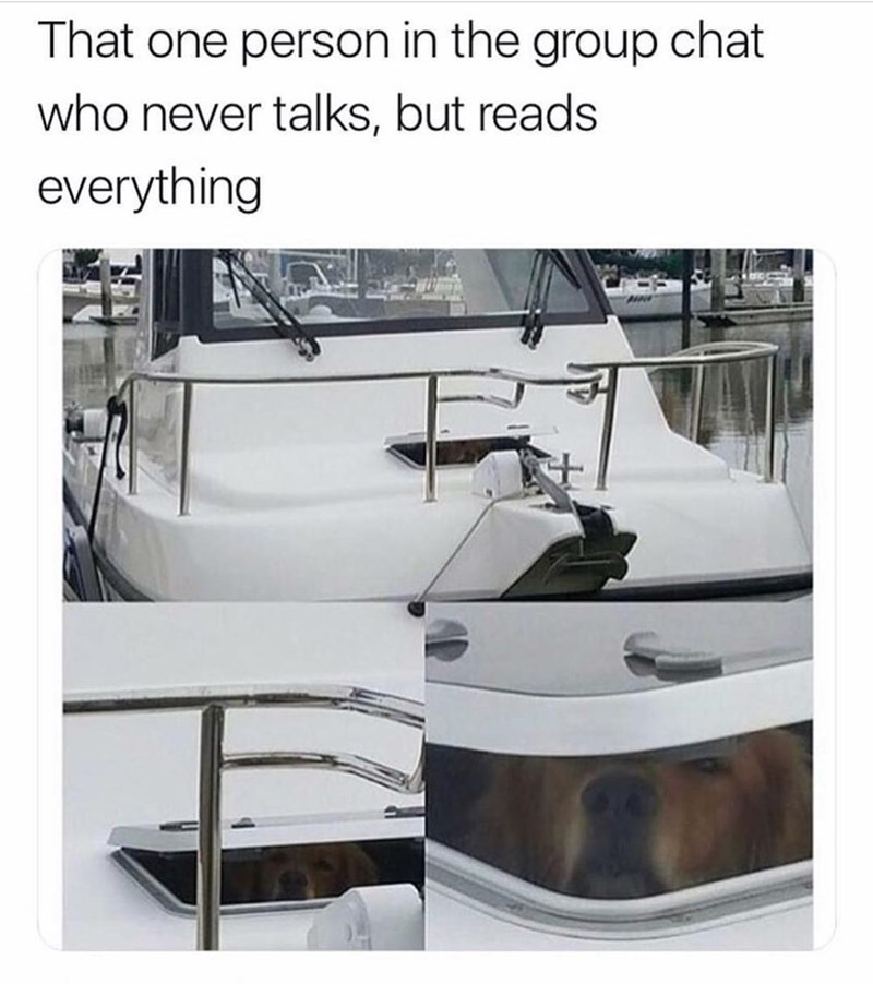 Funny meme about the group chat, dog in boat.