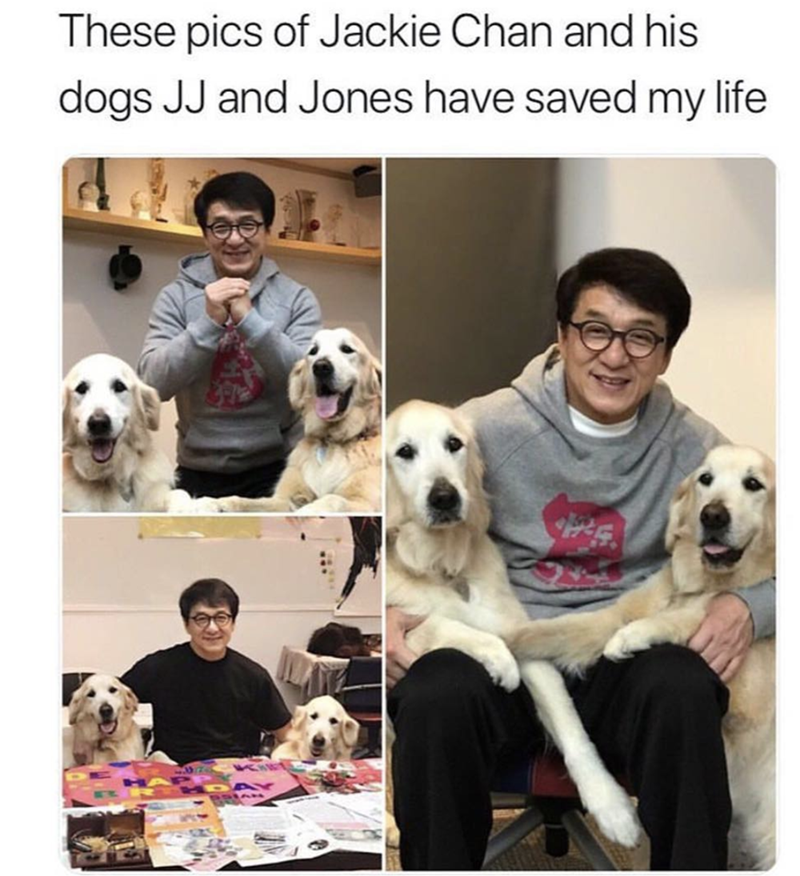 Vertebrate - These pics of Jackie Chan and his dogs JJ and Jones have saved my life
