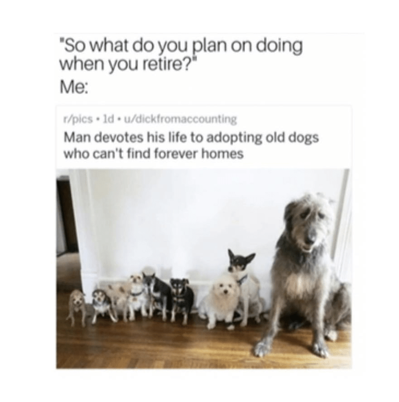 """Mammal - """"So what do you plan on doing when you retire?"""" Мe: t/pics 1d u/dickfromaccounting Man devotes his life to adopting old dogs who can't find forever homes"""