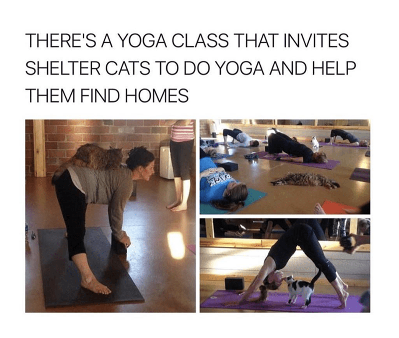 Physical fitness - THERE'S A YOGA CLASS THAT INVITES SHELTER CATS TO DO YOGA AND HELP THEM FIND HOMES