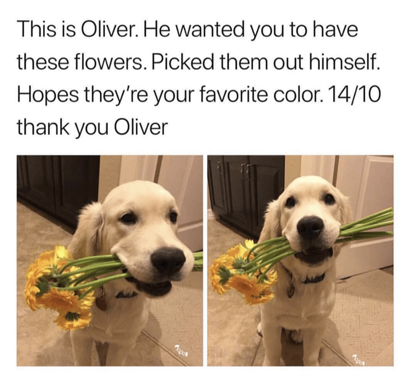 Dog - This is Oliver. He wanted you to have these flowers. Picked them out himself Hopes they're your favorite color. 14/10 thank you Oliver