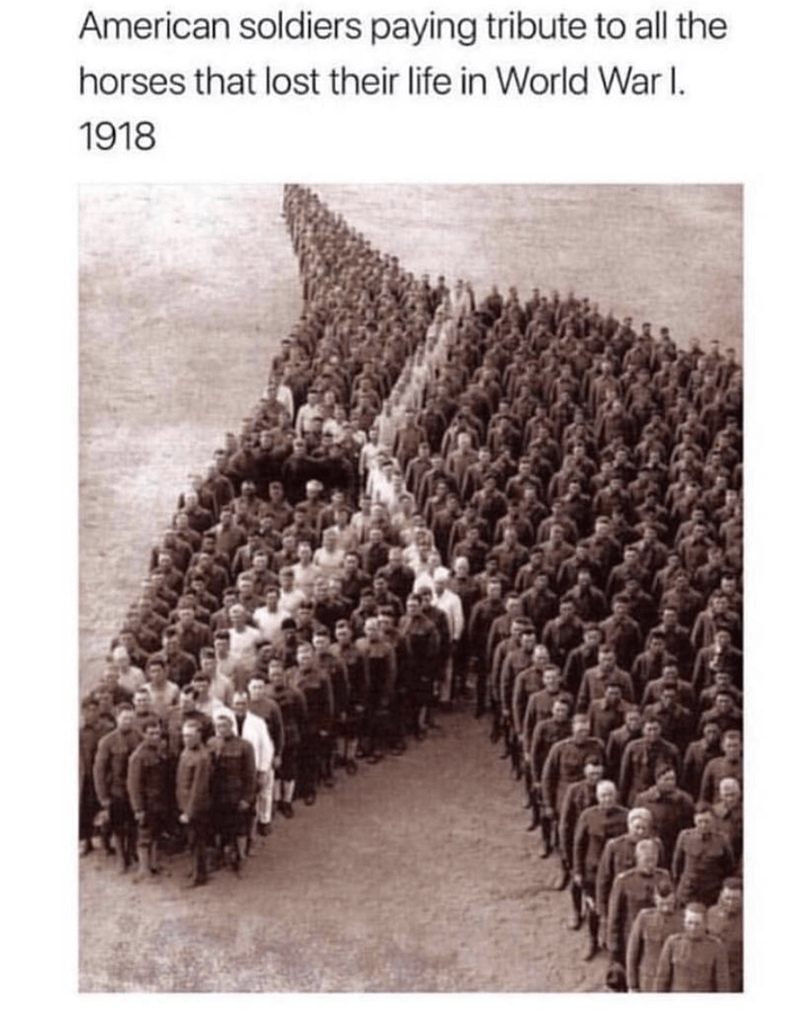 Text - American soldiers paying tribute to all the horses that lost their life in World War I. 1918