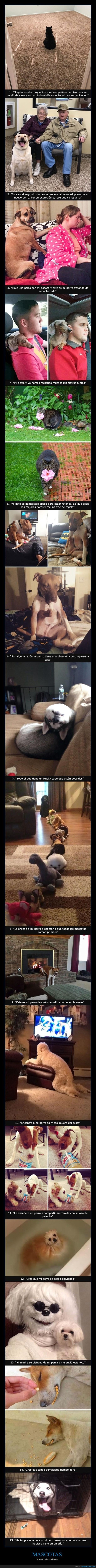 lista de animales que probaron que los perros son los mejores amigos del hombre