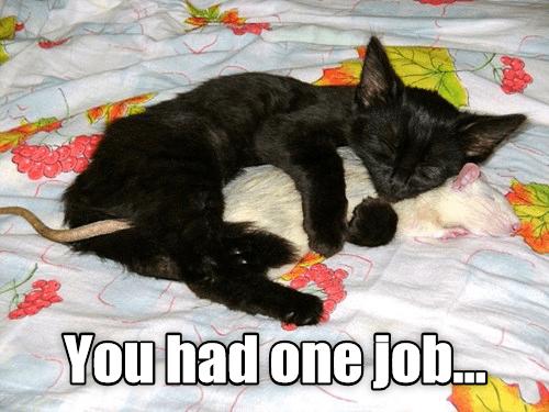 cat meme - Cat - You had one jobD