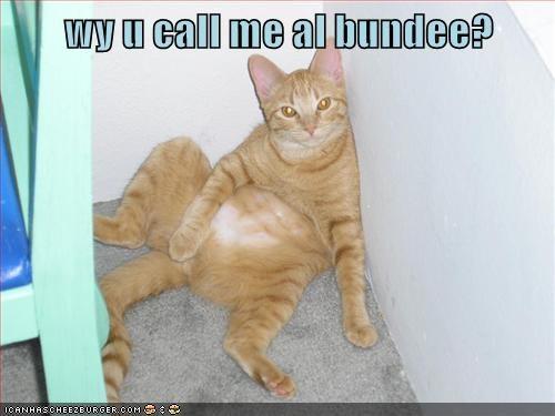 Y u call me al bundee?