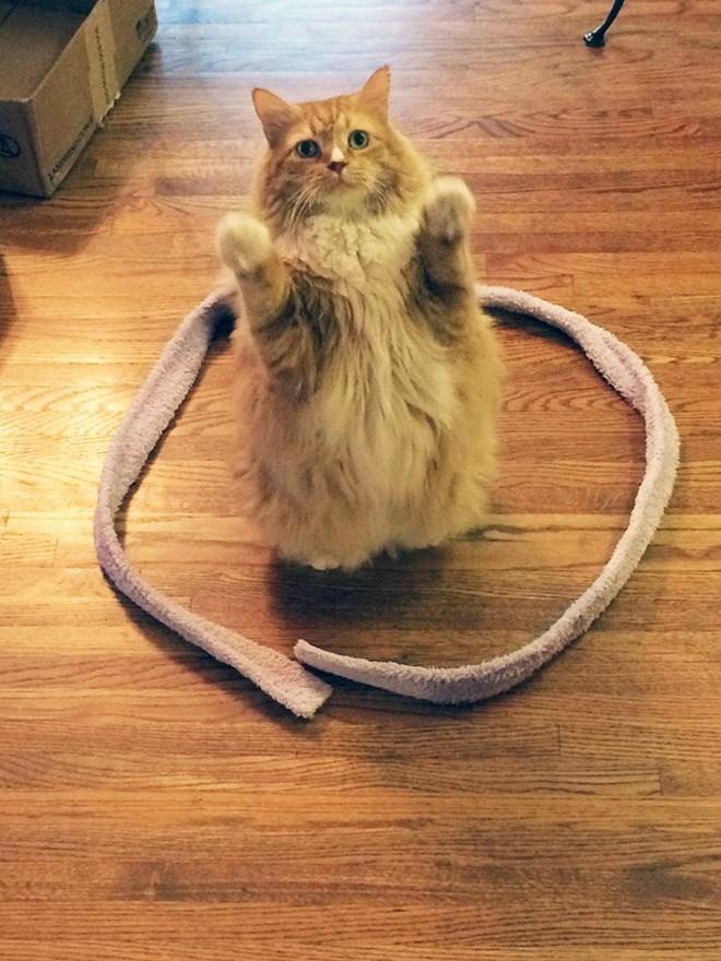 I gatti e i cerchi