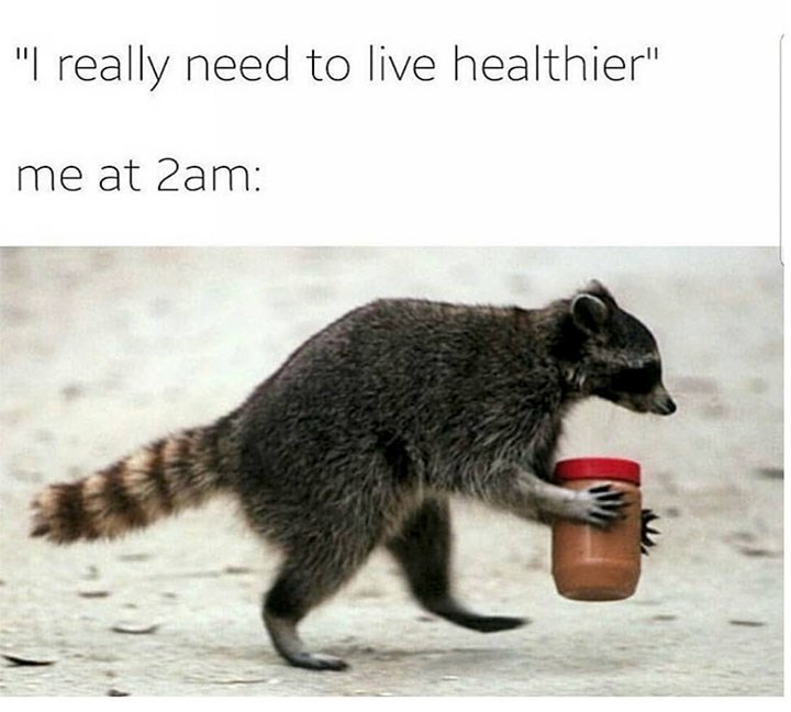 "Procyonidae - ""I really need to live healthier"" me at 2am:"