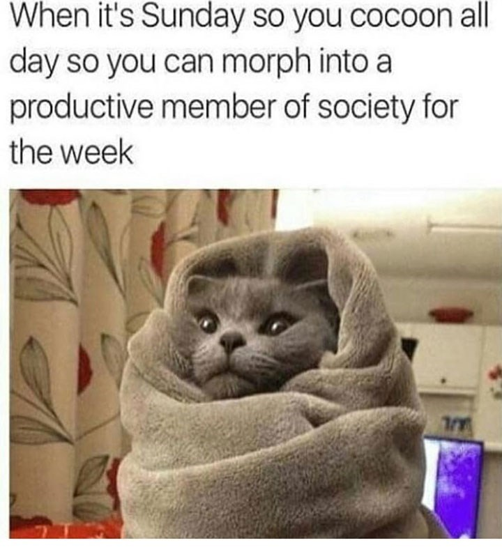 Cat - When it's Sunday so you cocoon all day so you can morph into a productive member of society for the week