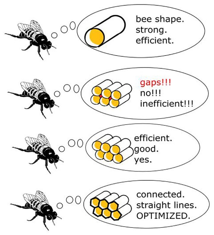 Insect - bee shape strong efficient. OC gaps!!! no!!! inefficient!!! efficient OO good. yes connected straight lines. OPTIMIZED. O0