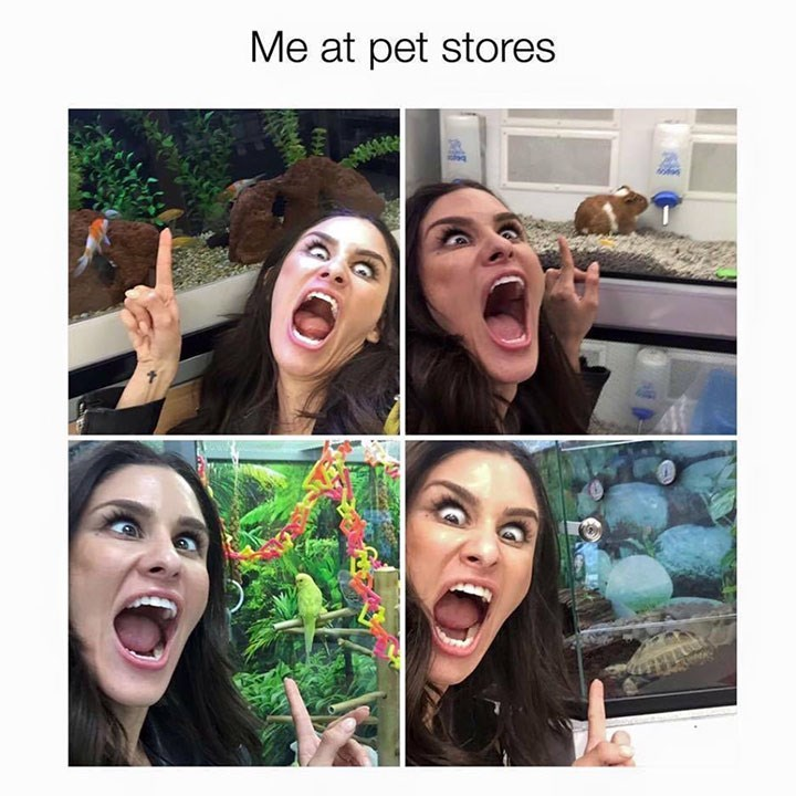 Face - Me at pet stores