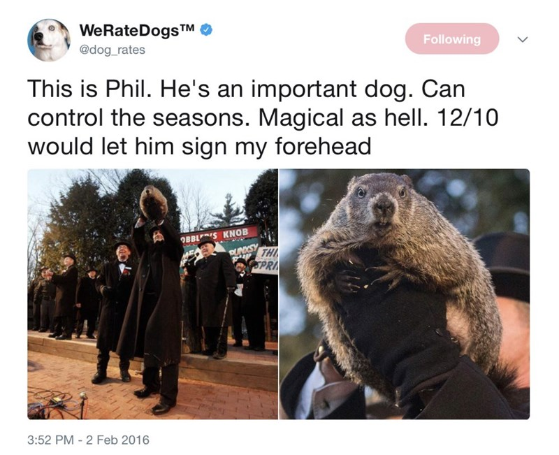 Adaptation - WeRateDogs TM @dog_rates Following This is Phil. He's an important dog. Can control the seasons. Magical as hell. 12/10 would let him sign my forehead OBBLS KNOB PUNKSY p TH SPR 3:52 PM 2 Feb 2016