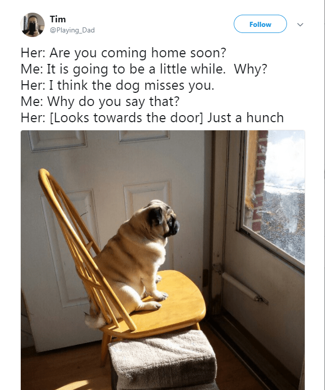 Pug - Tim Follow @Playing_Dad Her: Are you coming home soon? Me: It is going to be a little while. Why? Her: I think the dog misses you. Me: Why do you say that? Her: [Looks towards the door] Just a hunch