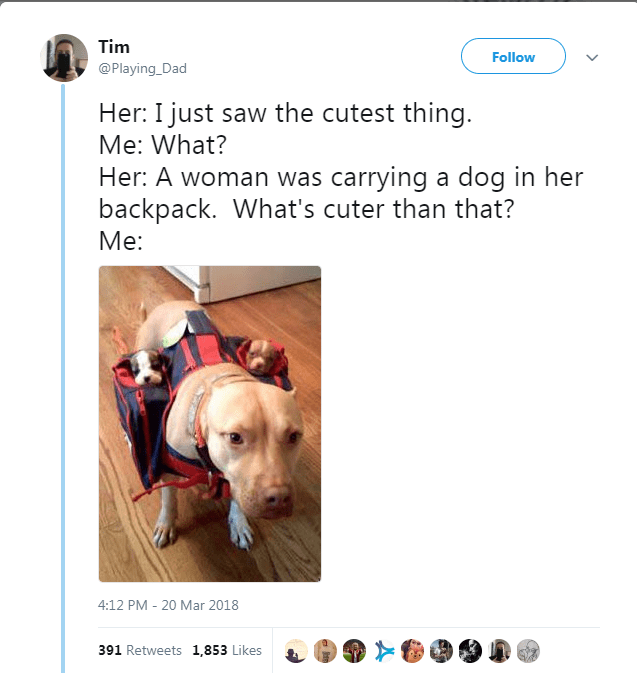 Dog breed - Tim Follow @Playing_Dad Her: I just saw the cutest thing. Me: What? Her: A woman was carrying a dog in her backpack. What's cuter than that? Me: 4:12 PM 20 Mar 2018 391 Retweets 1,853 Likes