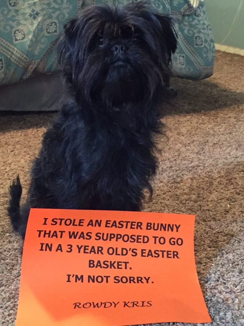 Dog - I STOLE AN EASTER BUNNY THAT WAS SUPPOSED TO GO IN A 3 YEAR OLD'S EASTER BASKET. I'M NOT SORRY. ROWDY KRIS