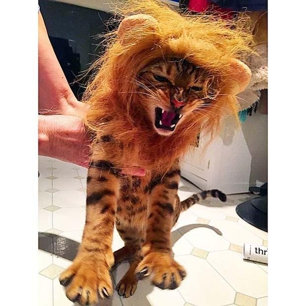 Lion - thr
