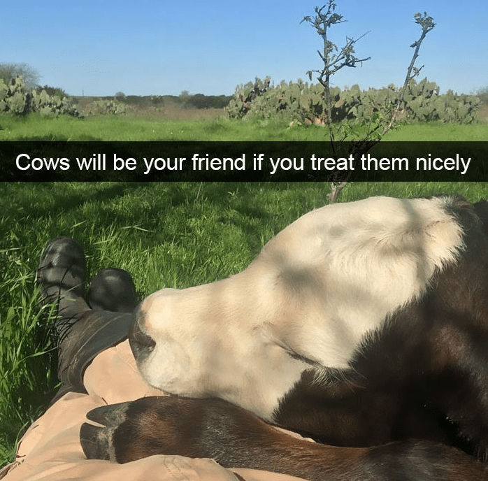 Wildlife - Cows will be your friend if you treat them nicely