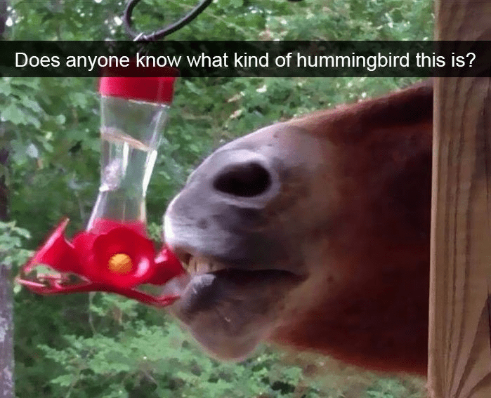 Adaptation - Does anyone know what kind of hummingbird this is?