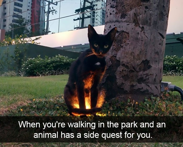 Cat - When you're walking in the park and an animal has a side quest for you.