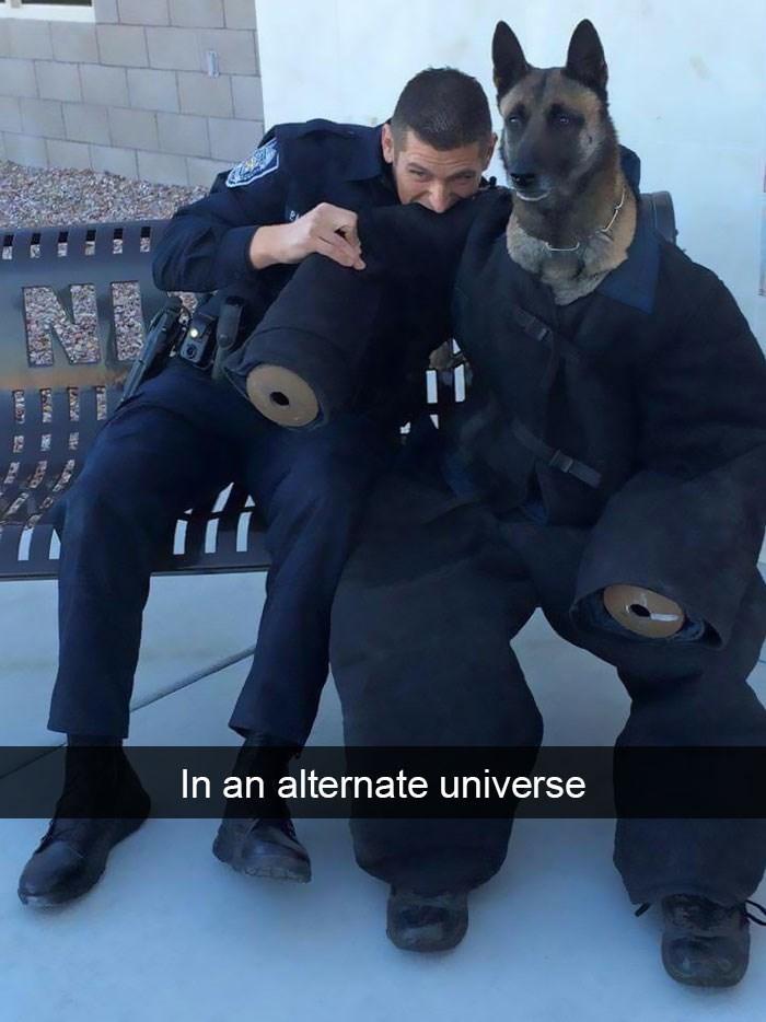 Police dog - ifi alternate universe