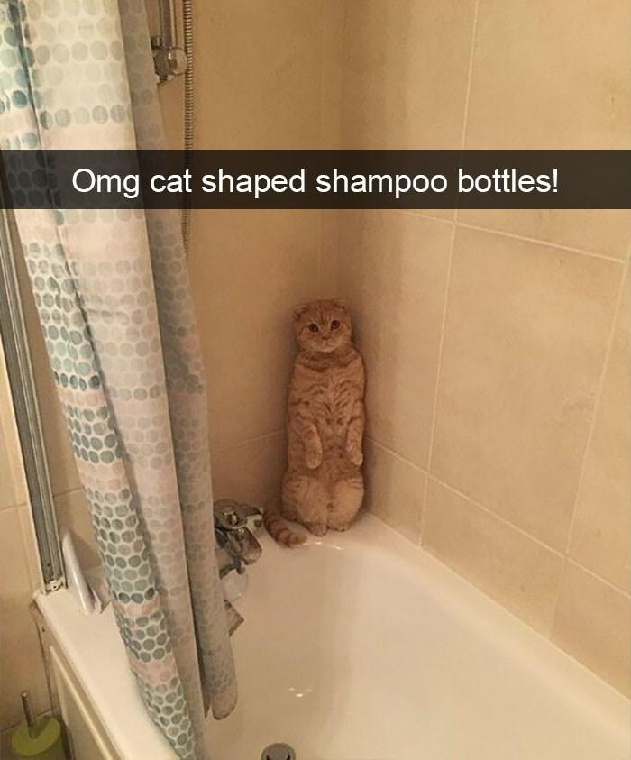 Bathroom - Omg cat shaped shampoo bottles!