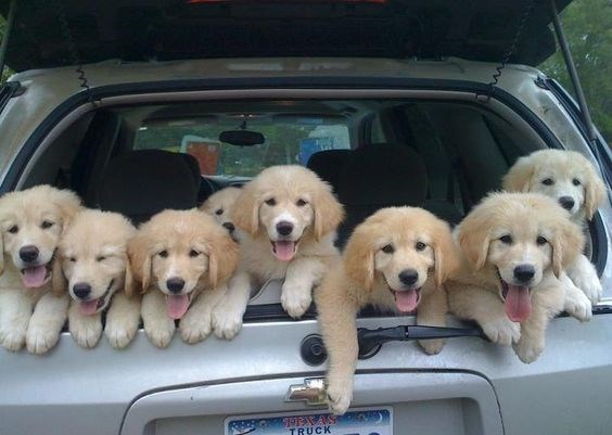 Dog - TRUCK