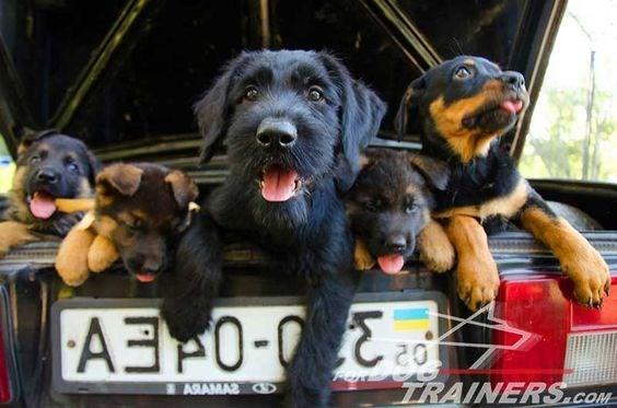 Dog - ARAMA2 TRAINERS.cOM