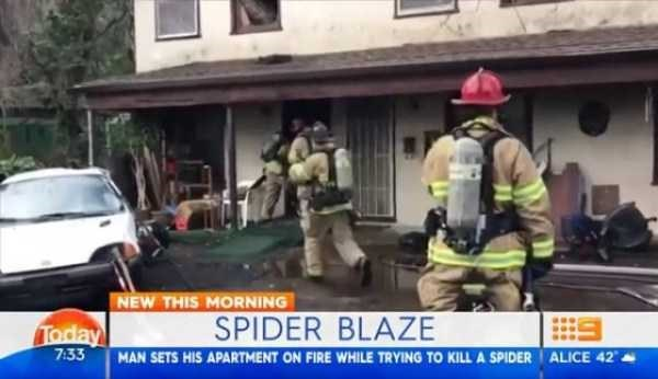 Firefighter - NEW THIS MORNING SPIDER BLAZE Today 7:33 ALICE 42 MAN SETS HIS APARTMENT ON FIRE WHILE TRYING TO KILL A SPIDER