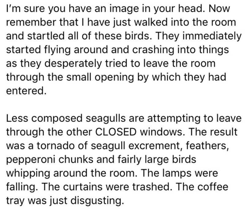 Text - I'm sure you have an image in your head. Now remember that I have just walked into the room and startled all of these birds. They immediately started flying around and crashing into things as they desperately tried to leave the room through the small opening by which they had entered Less composed seagulls are attempting to leave through the other CLOSED windows. The result was a tornado of seagull excrement, feathers, pepperoni chunks and fairly large birds whipping around the room. The