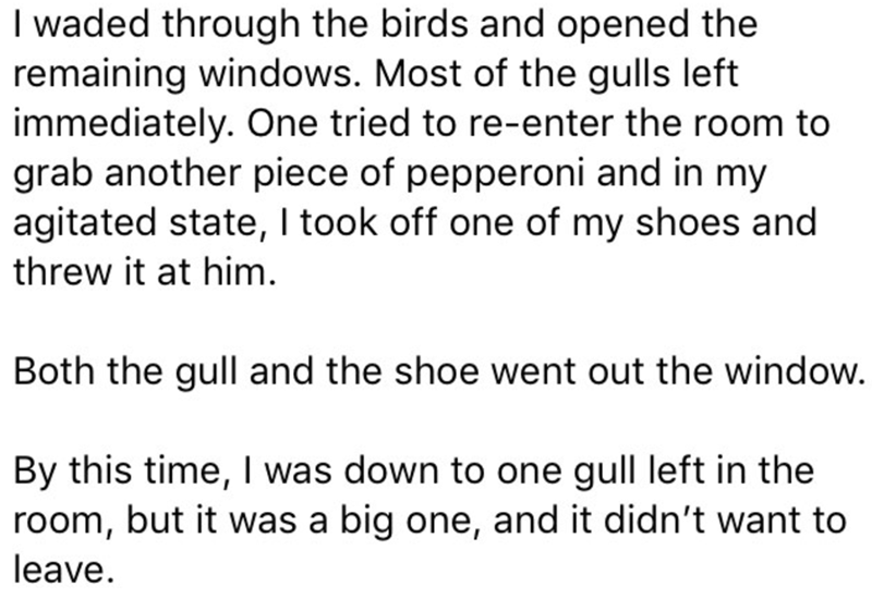 Text - I waded through the birds and opened the remaining windows. Most of the gulls left immediately. One tried to re-enter the room to grab another piece of pepperoni and in my agitated state, I took off one of my shoes and threw it at him. Both the gull and the shoe went out the window. By this time, I was down to one gull left in the room, but it was a big one, and it didn't want to leave.