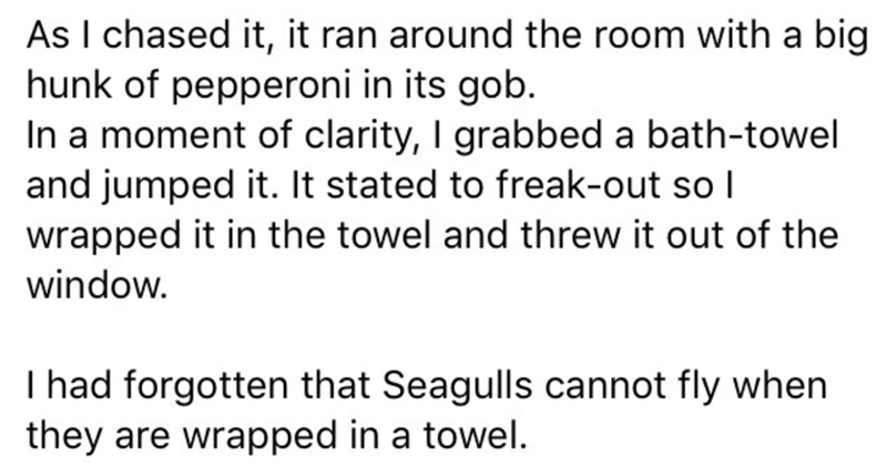 Text - As I chased it, it ran around the room with a big hunk of pepperoni in its gob. In a moment of clarity, I grabbed a bath-towel and jumped it. It stated to freak-out so I wrapped it in the towel and threw it out of the window. I had forgotten that Seagulls cannot fly when they are wrapped in a towel.