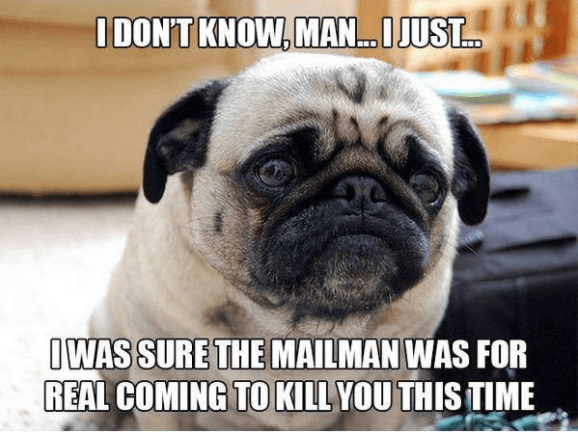 Pug - IDON'T KNOW, MAN...JUST. IWAS SURE THE MAILMAN WAS FOR REAL COMING TO KILL YOU THIS TIME