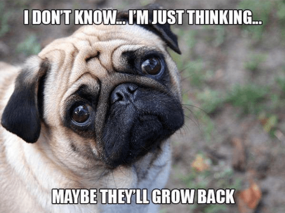 Dog - I DON'T KNOW..M JUST THINKING.. MAYBE THEYLL GROW BACK