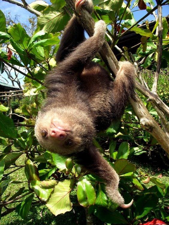 upsidedown - Mammal