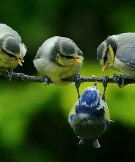 upsidedown - Bird