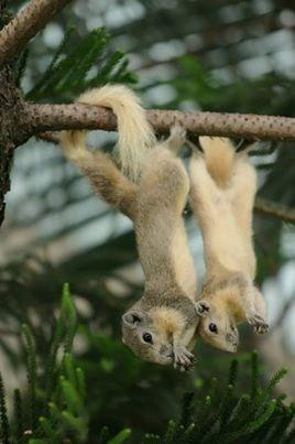 upsidedown - Terrestrial animal