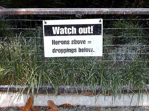 Grass - Watch out! Herons above droppings belovw.
