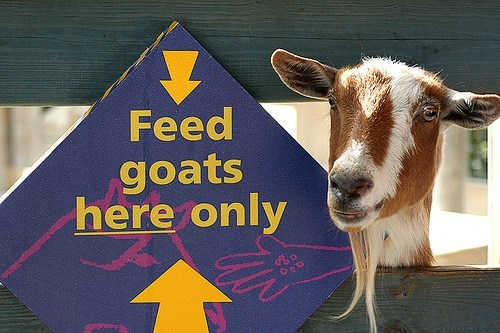 Goats - Feed goats here only