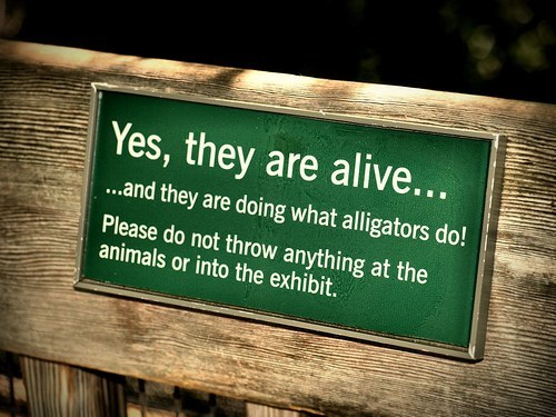 Text - Yes, they are alive... ...and they are doing what alligators do! Please do not throw anything at the animals or into the exhibit.