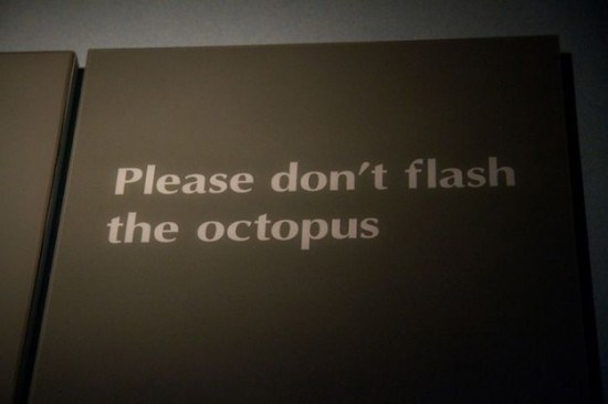 Text - Please don't flash the octopus