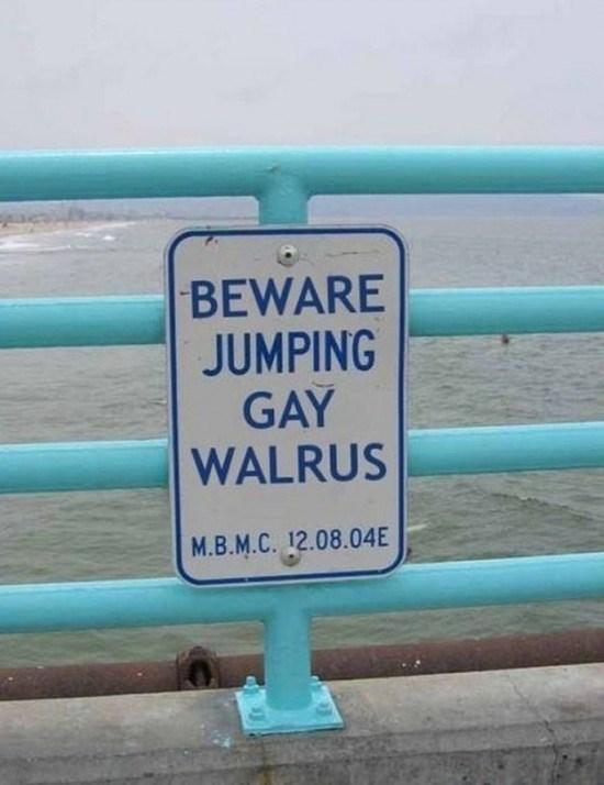 Turquoise - BEWARE JUMPING GAY WALRUS M.B.M.C. 12.08.04E