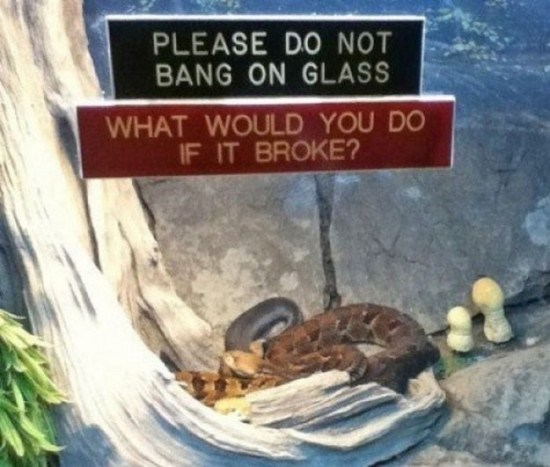Sign - PLEASE DO NOT BANG ON GLASS WHAT WOULD YOU DO IF IT BROKE?