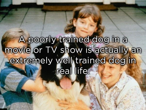 Dog breed - A poorly trained dog in a movie or TV show is actually an extremely well trained dog in real life