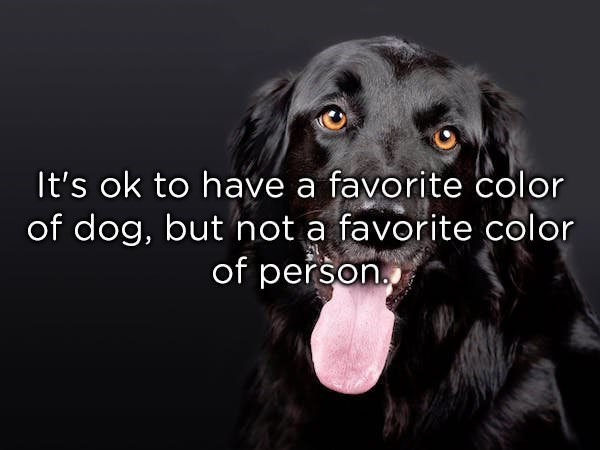 Dog - It's ok to have a favorite color of dog, but not a favorite color of person