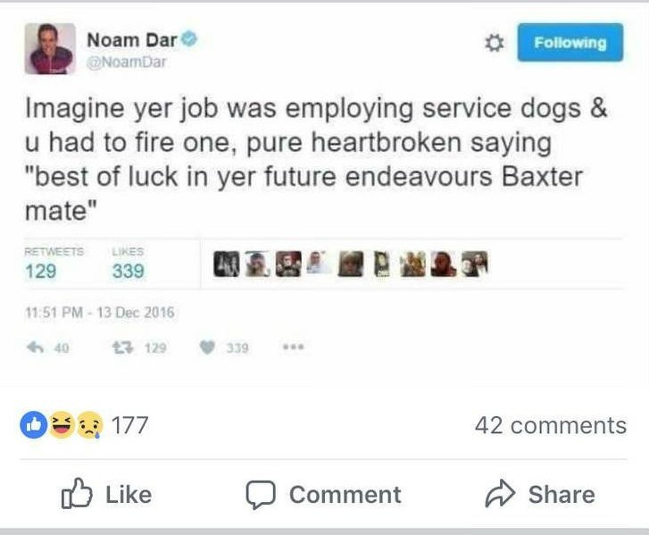 """Text - Noam Dar Following NoamDar Imagine yer job was employing service dogs & u had to fire one, pure heartbroken saying """"best of luck in yer future endeavours Baxter mate"""" LIKES RETWEETS 339 129 11:51 PM-13 Dec 2016 129 40 339 O177 42 comments Like Share Comment"""