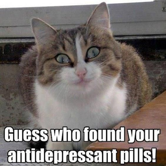 memes - Cat - Guess who found your antidepressant pills!