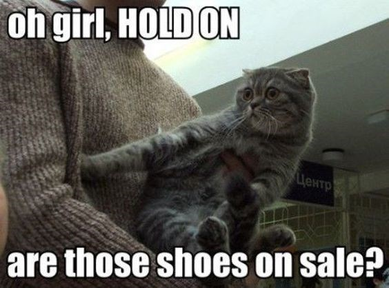memes - Cat - ohgirl, HOLD ON LieNTp are those shoes on sale?